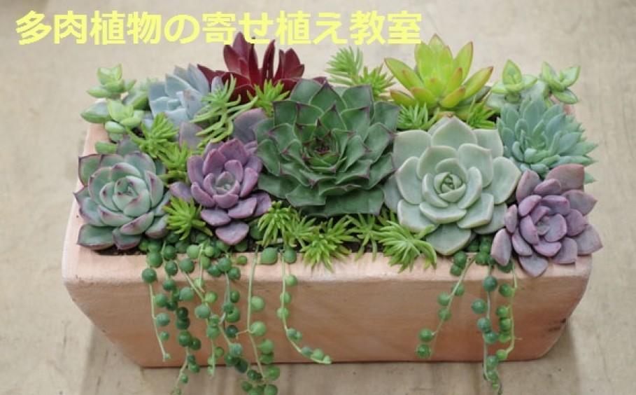 可愛い宝石箱みたいな多肉植物の寄せ植え教室