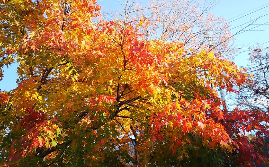 秋が深まってきましたね~簡単料理のご紹介~