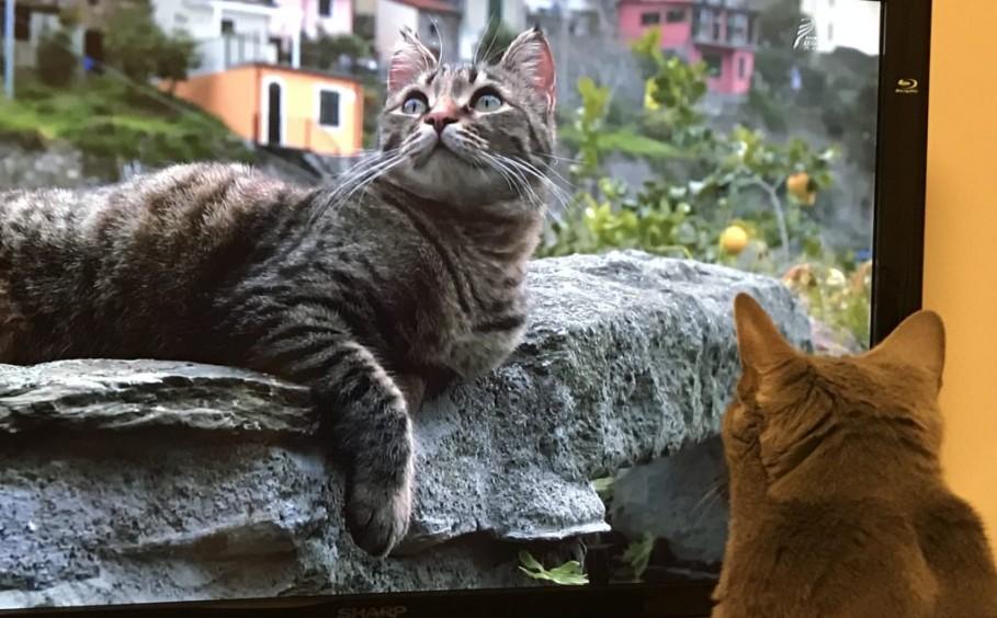 「猫とKurasuリフォーム」 Vol,Ⅱ~リフォーム・インテリアのことならサーラ~