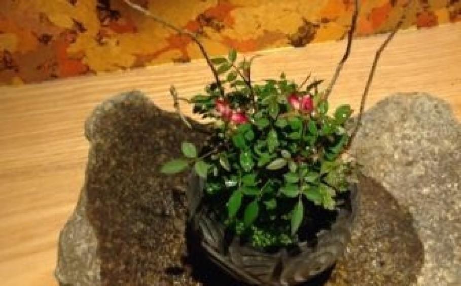 はじめての盆栽苔玉教室講座