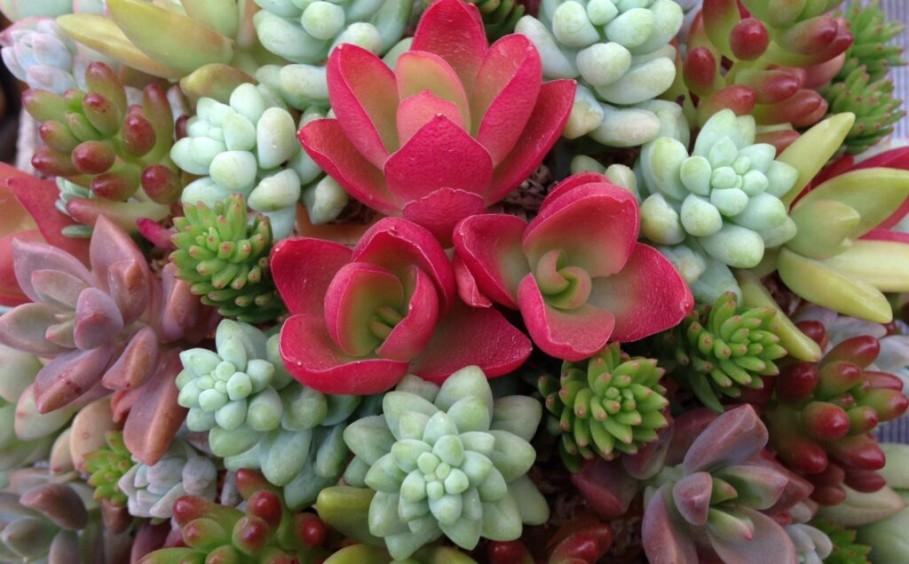庭やお部屋を彩りましょう。「多肉植物の寄せ植えセミナー」INサーラプラザ浜松